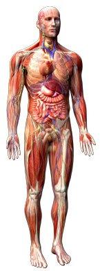 Oxygen in Human Body